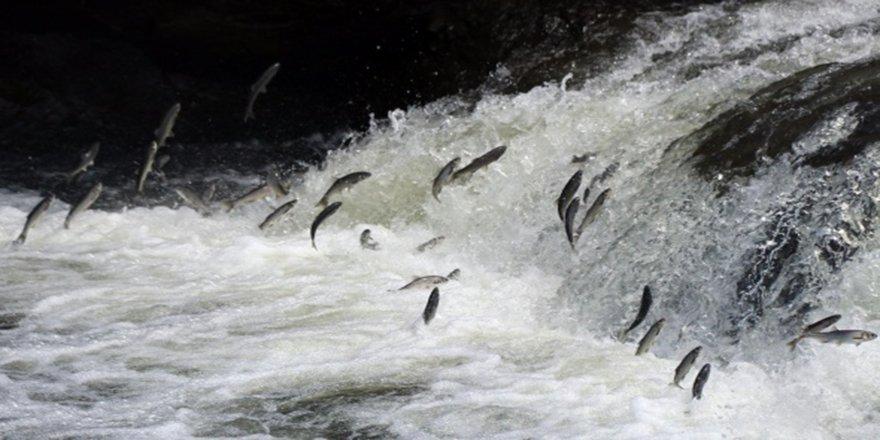 Uçan balıklardan görsel şölen