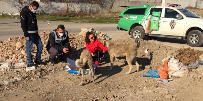 Kahramanmaraş'ta polis ekiplerinden sokak hayvanlarına yılbaşı sürp