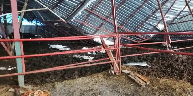 Kahramanmaraş'ta yoğun kar yağışı sonrası ahırların çatısı çöktü