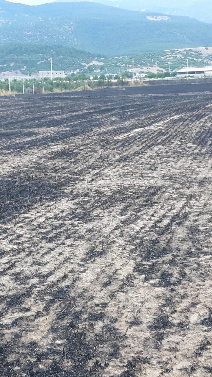 Kahramanmaraş'ta 200 dekar buğday tarlasıyla besi ahırı kül oldu 1
