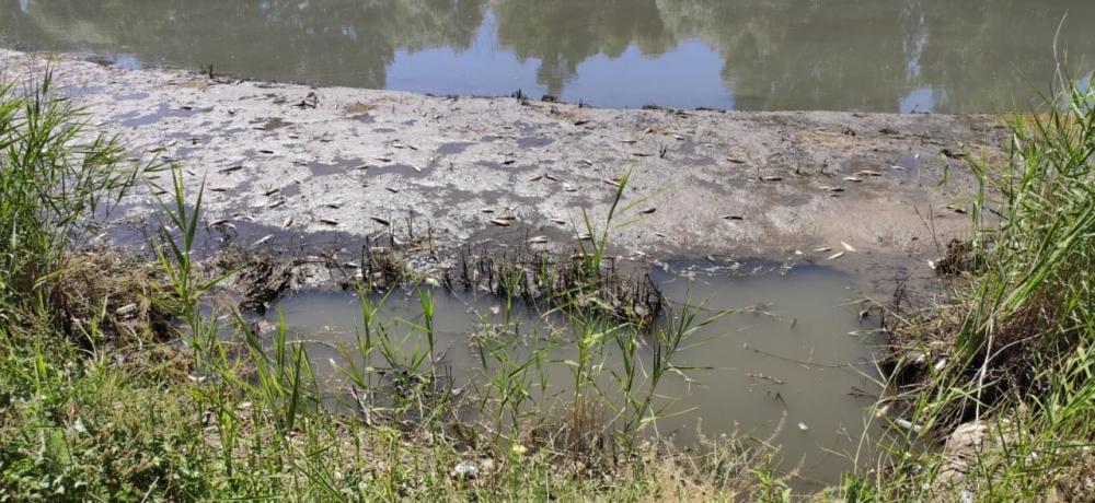 Kahramanmaraş'ta yüzlerce balık telef oldu 1