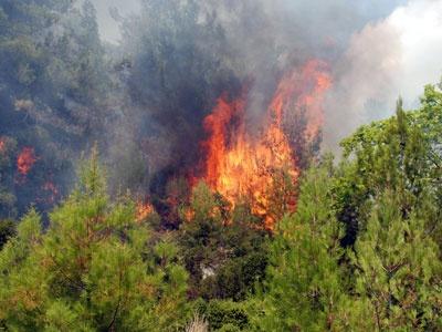 K.Maraş'ta Orman Yangını!