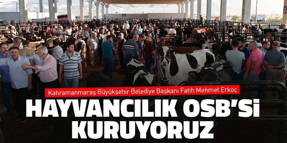 """Başkan Erkoç: """"Hayvancılık OSB'si kuruyoruz"""""""