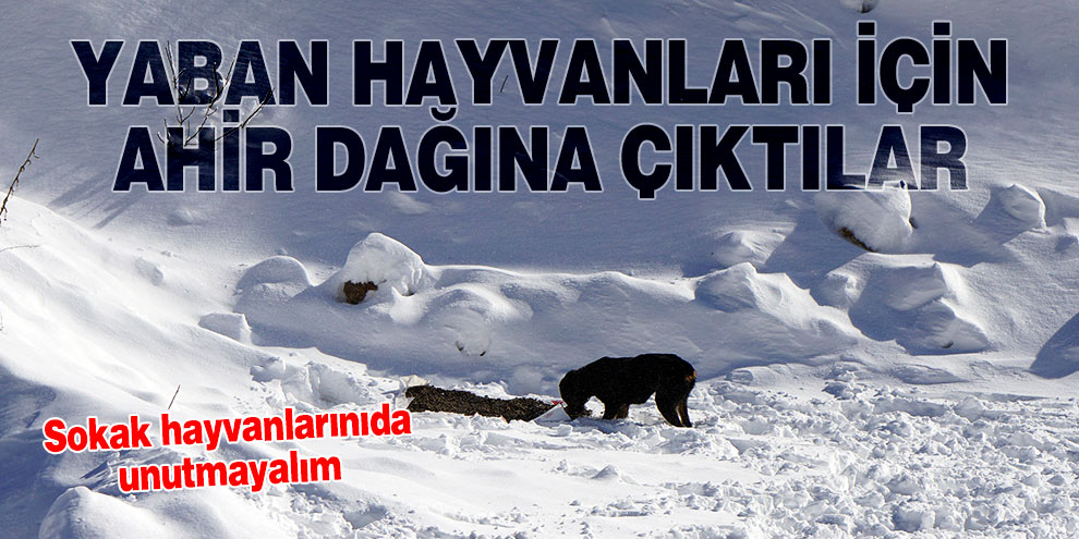 Yaban hayvanları için soğukta Ahir Dağına çıktılar