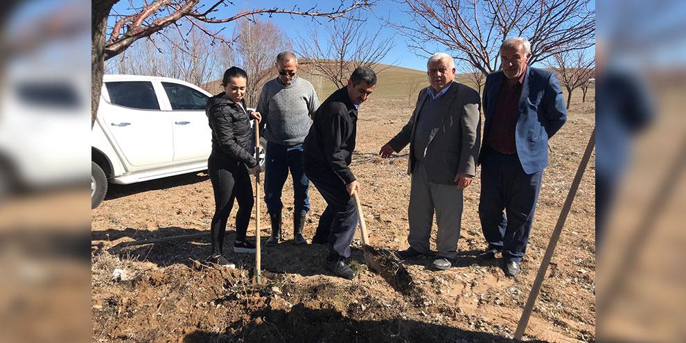 Elbistan'da kaysı ağaçlarına Gidya uygulaması