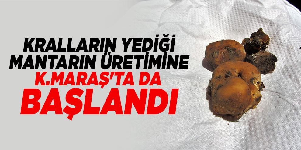 """Kahramanmaraş'ta kralların yiyeceği """"trüf mantarı"""" üretimi başlıyor"""