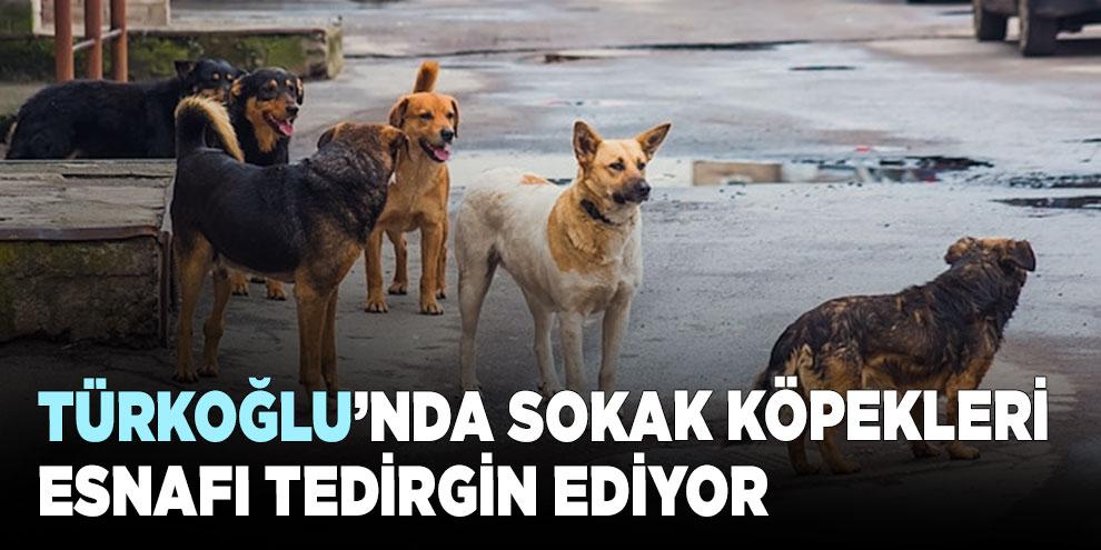 Türkoğlu'nda sokak köpekleri esnafı tedirgin ediyor