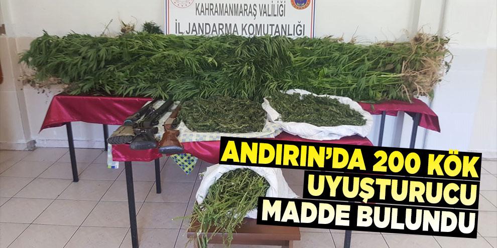 Andırın'da 200 kök uyuşturucu bitkisi bulundu