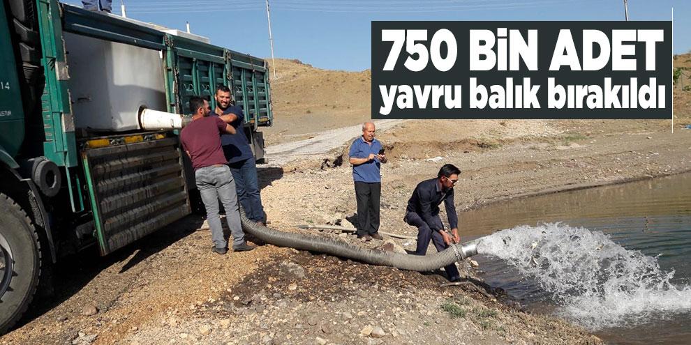 Adatepe ve Kandil Barajlarına 750 bin adet yavru balık bırakıldı