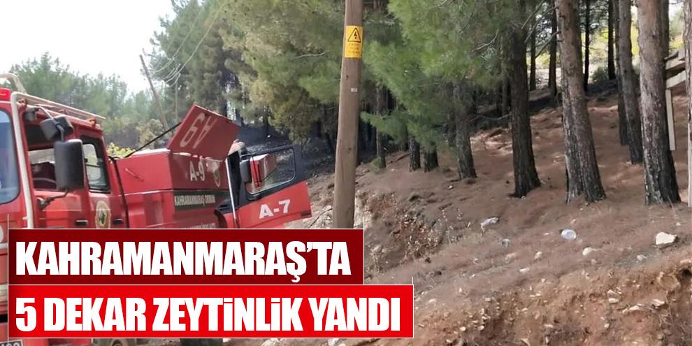 Kahramanmaraş'ta 5 dekar zeytinlik yandı