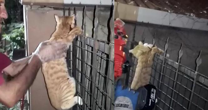 Evin balkonundan düşüp demir korkuluklara saplanan kedinin inanılmaz kurtuluşu