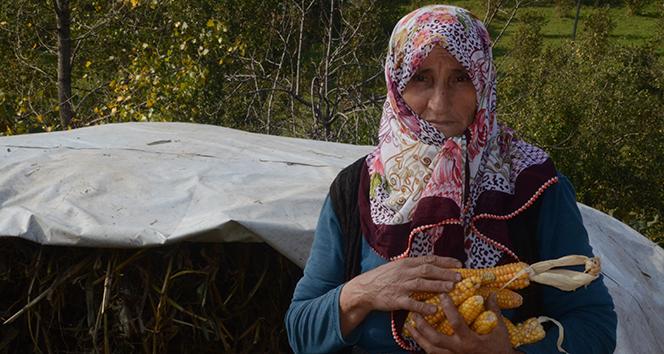 Türkiye'nin bu ilçesinde insanlar uzun yaşıyor