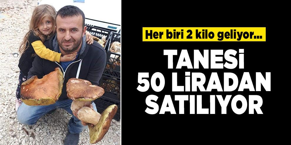 Her biri 2 kilo geliyor... Mantarın tanesi 50 liradan satılıyor