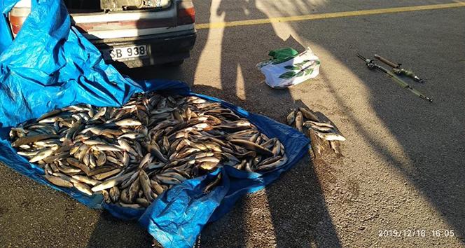 Kastamonu'da yasak olan 20 tırıvırı yakalandı