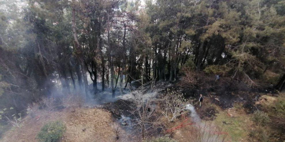 Korkutan orman yangını büyümeden söndürüldü