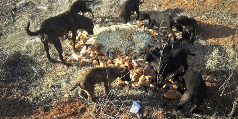 Herkes evine kapanmışken onlar sokak hayvanları için dışarıda