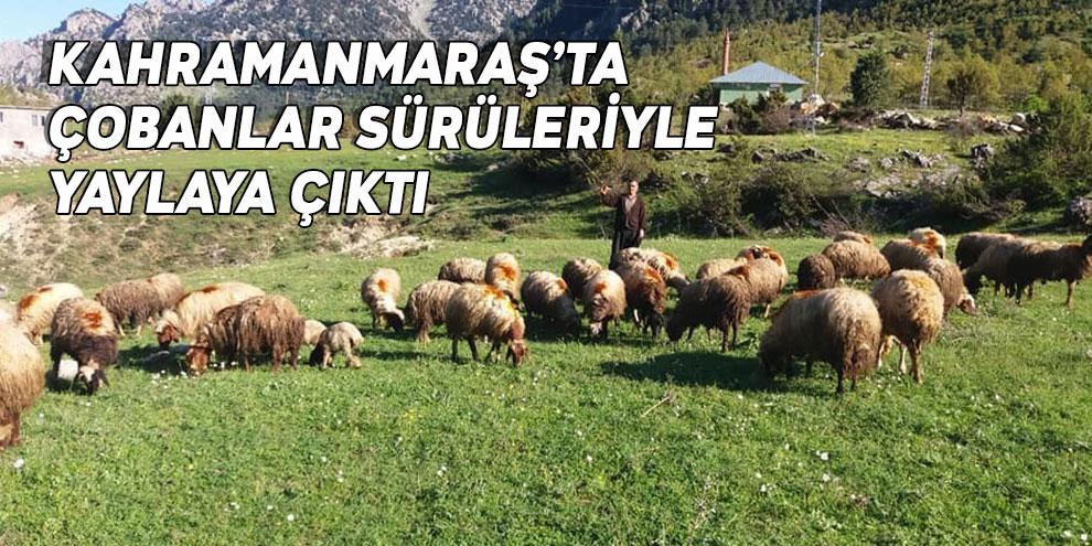 Kahramanmaraş'ta çobanlar sürüleriyle yaylaya çıktı