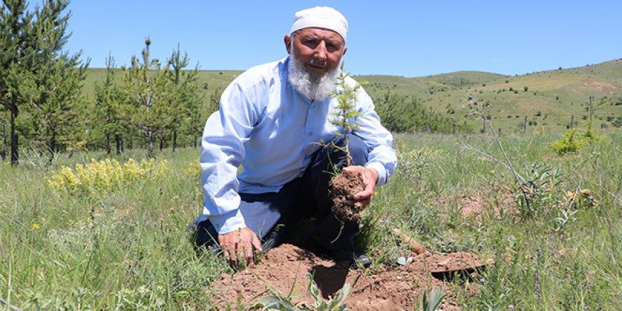 70'lik delikanlı köyüne 8 bin 500 ağaç dikti