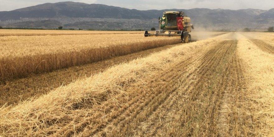 Kahramanmaraş'ta buğday hasadına başlandı
