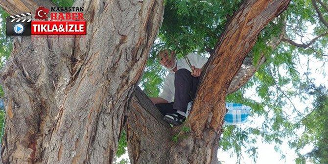 Oturacak yer bulamayan adam yastığıyla ağaca çıktı