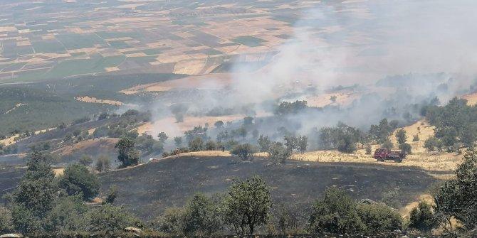 Gaziantep'de orman alanda yangın