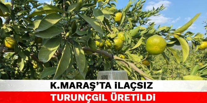 Kahramanmaraş'ta ilaç kullanmadan turunçgil üretildi