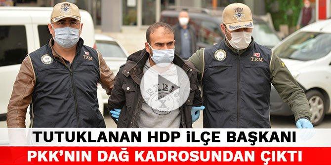 Tutuklanan HDP ilçe başkanı PKK'nın dağ kadrosundan çıktı