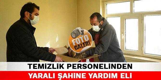 Kahramanmaraş'ta temizlik personelinden yaralı şahine yardım eli