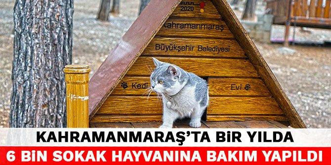 Kahramanmaraş'ta bir yılda 6 bin sokak hayvanına bakım yapıldı