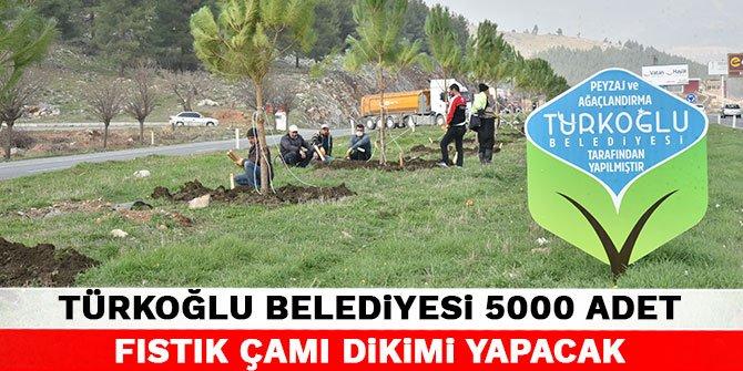 Türkoğlu Belediyesi 5000 adet fıstık çamı dikimi yapacak