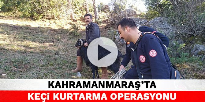 Kahramanmaraş'ta keçi kurtarma operasyonu