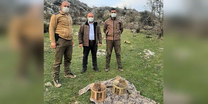 Pazarcık'ta kurak avı yapan 2 kişi yakalandı