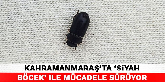 Kahramanmaraş'ta 'siyah böcek' ile mücadele sürüyor
