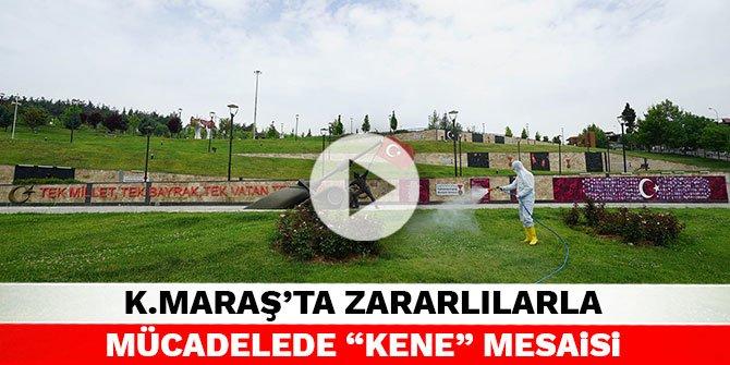 """Kahramanmaraş'ta zararlılarla mücadelede """"kene"""" mesaisi"""
