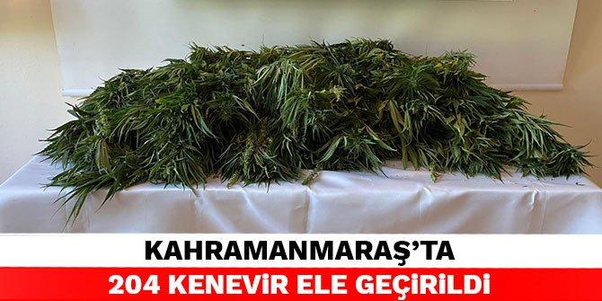 Kahramanmaraş'ta 204 kenevir ele geçirildi
