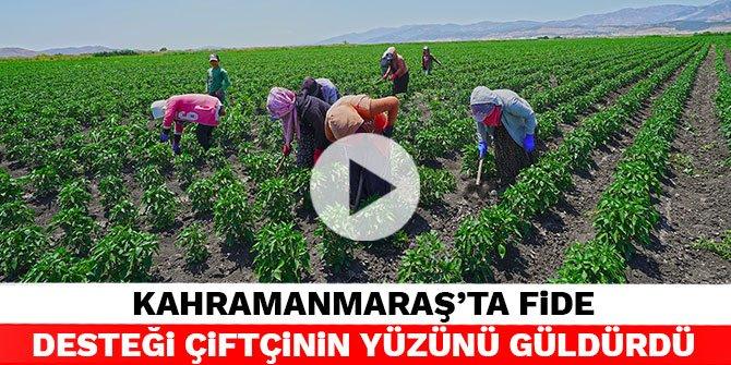 Kahramanmaraş'ta fide desteği çiftçinin yüzünü güldürdü
