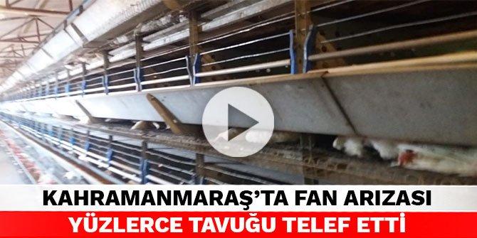 Kahramanmaraş'ta fan arızası yüzlerce tavuğu telef etti