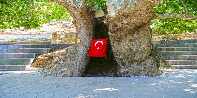 Kahramanmaraş'ta asırlık çınar turizme kazandırıldı