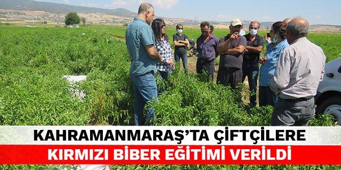Kahramanmaraş'ta çiftçilere kırmızı biber eğitimi verildi