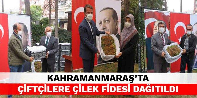 Kahramanmaraş'ta çiftçilere çilek fidesi dağıtıldı