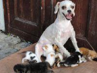 'Çirkin' 40 kediye annelik yaptı