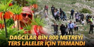 Dağcılar bin 800 metreyi ters laleler için tırmandı