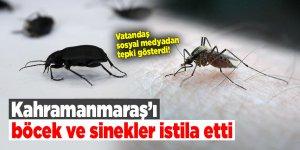 Kahramanmaraş'ı böcek ve sinekler istila etti