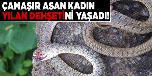 Çamaşır asan kadın yılan dehşetini yaşadı!