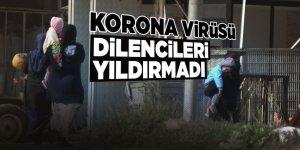 Korona virüsü dilencileri yıldırmadı