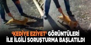 'Kediye eziyet' görüntüleri ile ilgili soruşturma başlatıldı