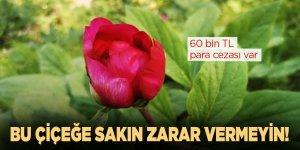 Bu çiçeğe sakın zarar vermeyin! 60 bin TL para cezası var