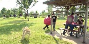 Korona virüs kılığına giren ünlü tiyatrocuyu köpek kovaladı