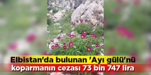 Elbistan'da bulunan 'Ayı gülü'nü koparmanın cezası 73 bin 747 lira!