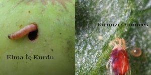 Dikkat! Elma İç Kurdu 3. Nesil ve Kırmızı Örümcek İlaçlama Zamanı